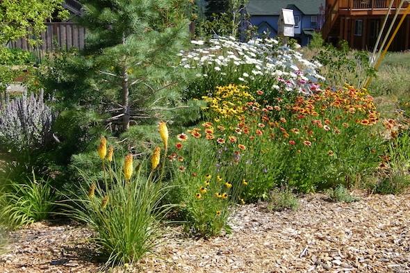 sunny-flower-bed-at-Evens-Family-Garden