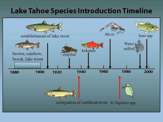 Tahoe Ecosystem