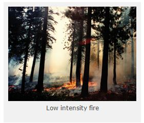 Low Intensity Fire