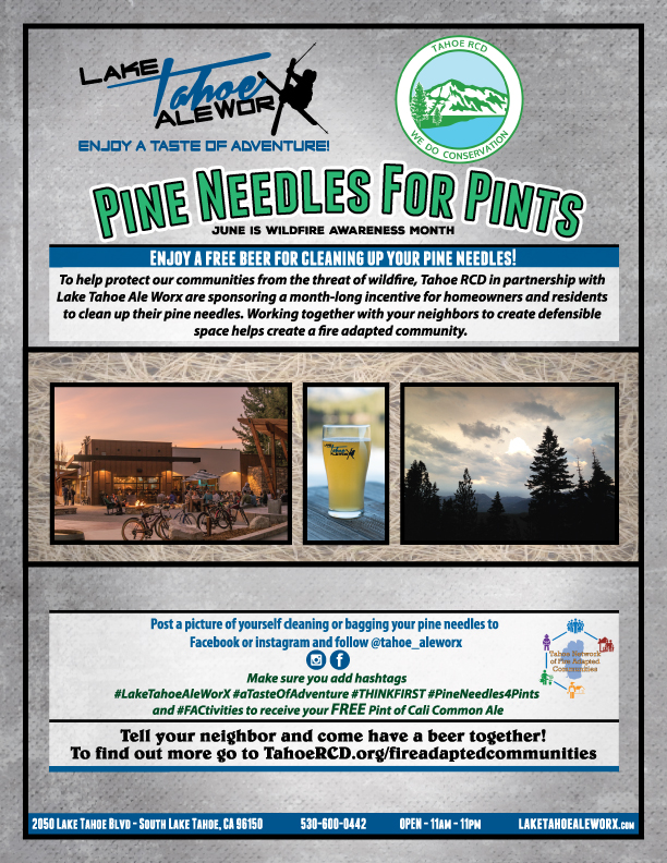 Pine Needles for Pints Flyer