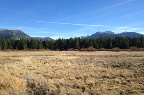 Johnson Meadow - Dry