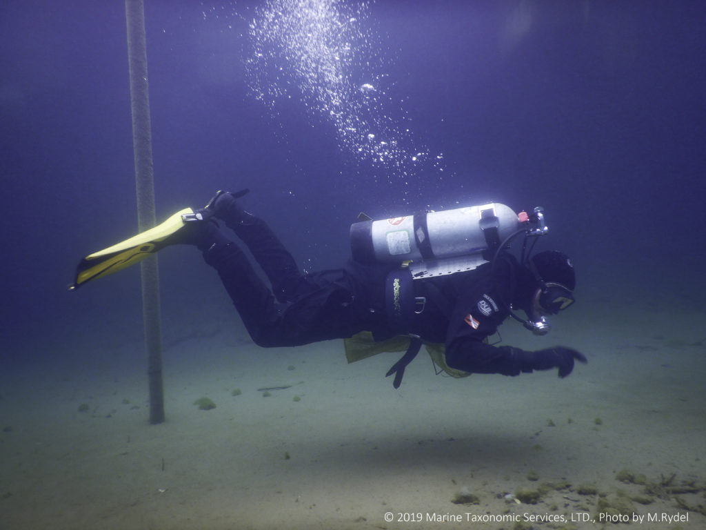 Image shows a scuba diver swimming in blue water near the lake bottom.