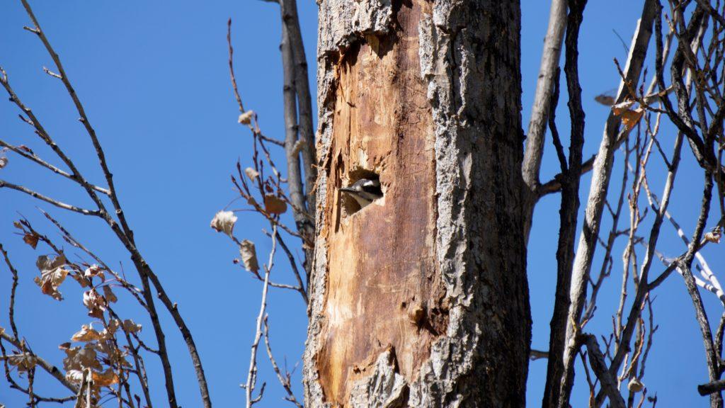 A bird inside a tree
