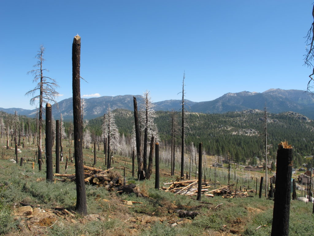 Dead trees in Angora burn scar